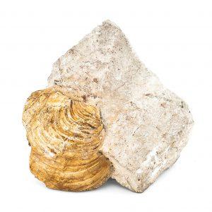0059 P. P. Małż z rodz. PANOPAEA, era mezozoiczna - Kreda Górna – Mastrycht – 72 – 66 milionów lat temu.