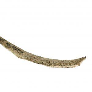 0217 M. A. Przekłuwacz– narzędzie (Jasło stan. 29, pow. jasielski) ok. XVII – XIII w. p. n. e, róg zwierzęcy