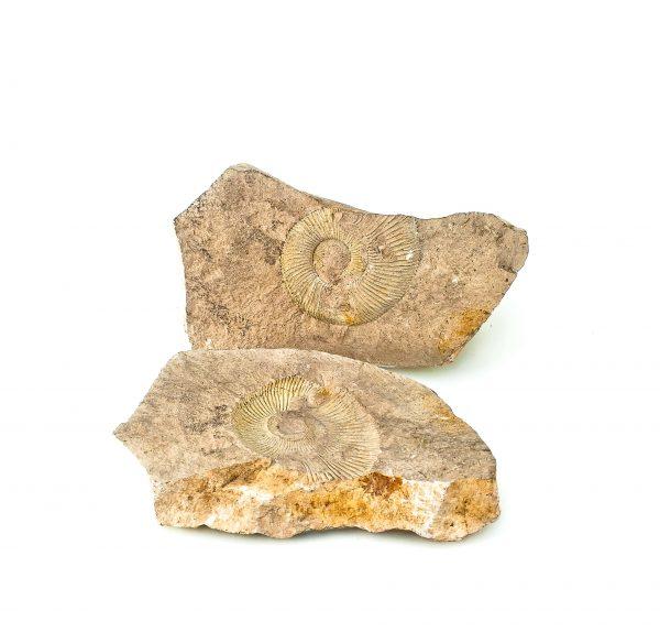 0342 P. P. Amonit +jego negatyw, era mezozoiczna – Jura -201 – 145 milionów lat temu.