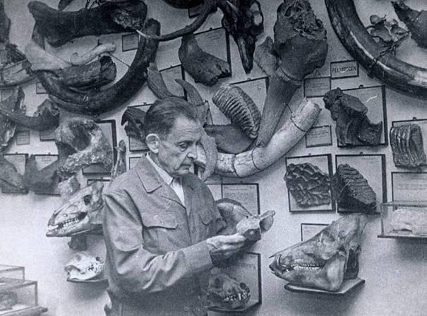 Dr Stanisław Kadyi na tle swojej kolekcji paleontologicznej, Jasło, lata 60-te XX w